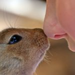 Rabbits and dogs have millions of odour detecting cells